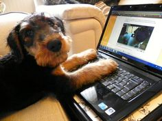 Dogs are learning valuable skills that will make them competitive in today's job market.