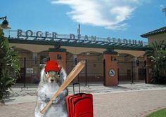 I love the rally squirrel!