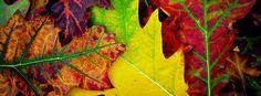 Free photo: Autumn, Colors, Leaves, Season - Free Image on Pixabay ...