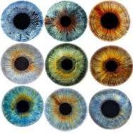 Картинки по запросу eye iris images