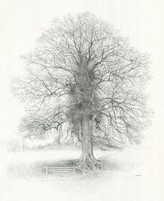 Henbury Tree by William Geldart