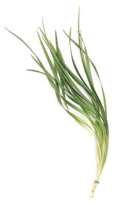 Lily Grass $16/100stems, $35/250 stems