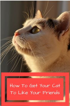 How to get your cat to like your friends http://mobikitty.com/how-to-get-your-cat-to-like-your-friends/