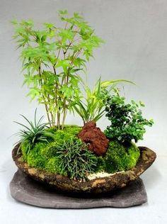 Garden Terrarium, Bonsai Garden, Garden Plants, Miniature Plants, Miniature Fairy Gardens, Little Gardens, Small Gardens, Indoor Water Garden, Indoor Plants