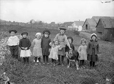 Children in a turnip field, New Brunswick, 1912