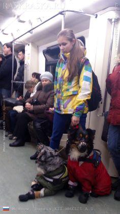 Australian Shepherds in Moscow Underground. Dogs photos in Raskraska. Moscow Metro, Winter Outfits, Winter Clothes, Australian Shepherds, Street Photo, Dog Photos, Pet Dogs, Russia Winter, Moscow Russia