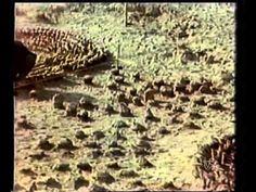 LA RUTA DE LA SEDA CAPITULOS 1 AL 3 (DOCUMENTAL ORIGINAL TVE2) - YouTube How To Dry Basil, Artist, Youtube, Documentaries, Paths, Silk, Artworks, The Originals, Artists