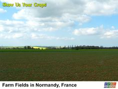 Healthy, young, and soon to be plentiful crops growing in rich soil in Normandy, France.  Your fields can look as good as this one by getting your soil tested to see what nutrients are available to your plants; visit http://soilkits.com/soilkits.html for our Soil Kits testing packages.  #tpsl #ag #lab #agriculture #AgBlog #AgTech #Agronomics #BioTech  #Farm #Farming #Farmers