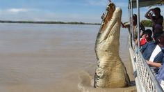 Image detail for -Adelaide's Jumping Crocodile | Travel Guest Blog at ApartmentsApart