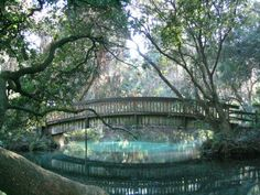 Juniper Springs in Ocala National Forest looks like a scene straight out of a fairy tale. (And other cool florida places) Ocala Florida, Florida Springs, Destin Florida, Florida Vacation, Florida Travel, Vacation Places, Vacation Spots, Places To Travel, Places To See