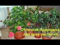 Мои цветы и супер подкормка для всех комнатных растений. - YouTube