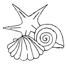 sea shells Coloring Pages | Afficher cette image de Shells