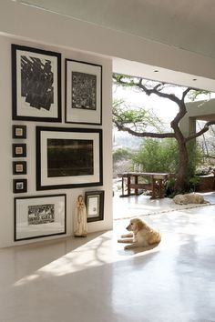 House in Windhoek, Namibia owned and designed by architect Leon Barnard, the home design features a seamless integration with the outdoors and a minimalist approach to furnishings. dogs interiors home decor - Model Home Interior Design Decor, House Design, Interior And Exterior, Interior Inspiration, Decor Design, Home Decor, House Interior, Home Deco, Interior Design