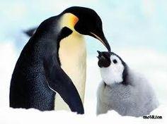 les gusta el pinguino con su hijito???