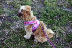 Kimono Dog Harness Pattern + Tutorial « by Jill Myslinkski for the Sew,Mama,Sew! Blog