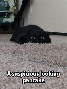 funny animal pictures | black cat | pancake