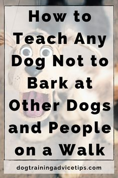 How to Teach Any Dog Not to Bark at Other Dogs and People on a Walk - Dog Training Advice Tips Dog Training Treats, Best Dog Training, Brain Training, Dog Hacks, Dog Barking, Service Dogs, Dog Behavior, Dog Care, Pet Dogs