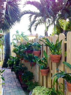 Orchids hanging in clay pots on a privacy fence using hangapot, the hidden hanger. Nice design using angles.