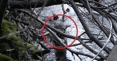 Эти девушки спасли волка из ледяной воды. То, что случилось потом, невозможно смотреть без слез!