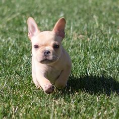 I'm like Hasselhoff running on the beach. Ok, so it's more like a nugget in grass, but I look good.