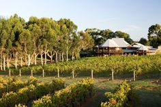 Cullen Wines and Vasse Felix have upped the ante in Margaret River's highly-competitive winery restaurant scene.Both home to two of Australia's greatest wineries, Cullen and Vasse can now say the same about their restaurants after being the only WA. Visit Australia, Australia Travel, Western Australia, Margaret River Wineries, Scuba Diving Australia, Malbec Wine, Wine Safari, Australian Beach, Napa Valley Wine