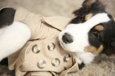 cute coat for cute dog