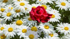 Il personal branding è il processo attraverso il quale costruiamo la nostra immagine e la comunichiamo in maniera efficace. Ma come si fa personal branding? Personal Branding, Blog, Rose, Flowers, Plants, Pink, Roses, Florals, Blogging