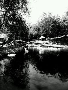 Swan- houseatheart.blogspot.ro Swan, My Arts, Swans