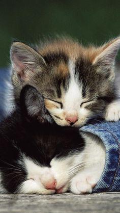 Kleine Kätzchen #Baby #Katzen #Tiere ♥ stylefruits Inspiration ♥