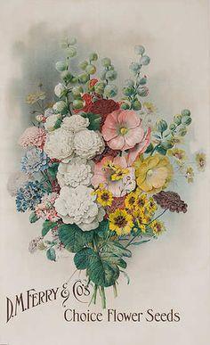 D.M. Ferry & Company's Choice Flower Seeds