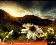 Mike Murphy. Fotografía 2.