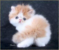 Are you looking at me? ARE YOU LOOKING AT ME? #cutecats #cats #animals