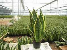 Plantas purificadoras de aire - YouTube