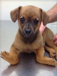 Recently, someone abandoned an adorable, severely deformed puppy along the side of a road in Jasper, Alabama.