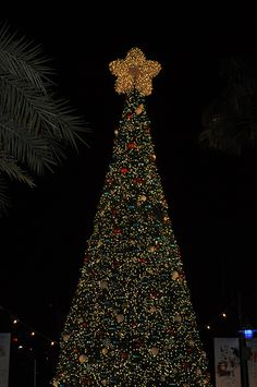 Christmas at SeaWorld Orlando