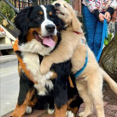 Say hello to my favorite neighbor furiend Big Hugo - Welpen Cute Little Animals, Cute Funny Animals, Funny Dogs, Baby Animals Pictures, Cute Animal Pictures, Cute Dogs And Puppies, I Love Dogs, Doggies, Beautiful Dogs