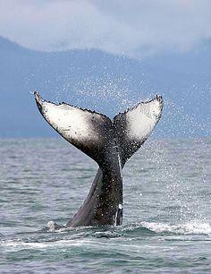 Favorite Place: Juneau, Alaska