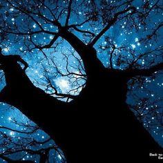 Blue night sky filled w/ stars