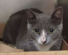 ***TO BE DESTROYED 08/21/16 ***5 MONTH OLD DEATH ROW INMATE Let's repeat that just in case you can't believe your eyes: 5 MONTHS OLD AND ON DEATH ROW. Meet Omega, the cat of the moment. Omega was brought into the ACC as a