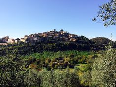 Olive groves of Casperia, Italy