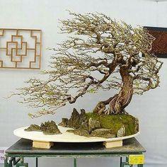 """1,108 Likes, 10 Comments - #bonsai Gram (@bonsaigram) on Instagram: """" from @bonsai_wisconsin"""" #bonsaitrees"""
