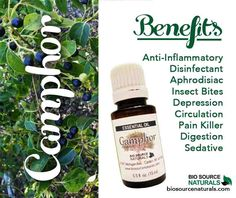 Camphor essential oil helps relieve depression and many other ailments. Shop affordable and therapeutic essential oils and blends with BioSource Naturals! #aromatherapy