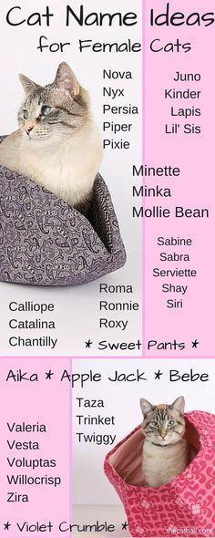Girl Kitten Names Girl Kitten Names Girl Girl Kitten Names