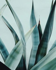Form in Nature #lifewithbird #inspiration #succulents #cactus #nature