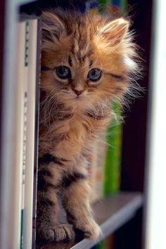Kitten shelf for sure!