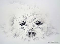 Yuri, my maltese dog. (graphite) Maltese Dogs, Animals, Black, Alone Photography, Blanco Y Negro, Paintings, Fotografia, Animais, Animales