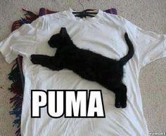 Puma, looks legit to me...