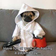 Internet celebrity Doug the Pug Cute Pug Puppies, Fluffy Puppies, Cute Pugs, Puppies Tips, Doggies, Funny Animal Memes, Funny Dogs, Funny Animals, Cute Animals