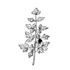 Liperi / Lipstikka | Osastot | Hyötykasviyhdistys Lotus Flower, Herbs, Tattoos, Flowers, Tatuajes, Tattoo, Herb, Royal Icing Flowers, Lotus Flowers