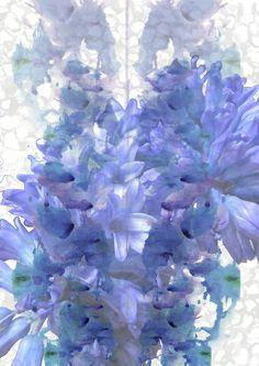 Delphinium. Blue. Flower. Print. Ink.